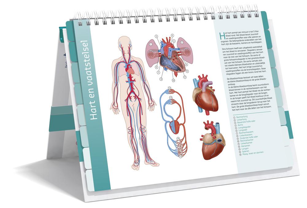 Zorgatlas Cholesterol - Binnenwerk