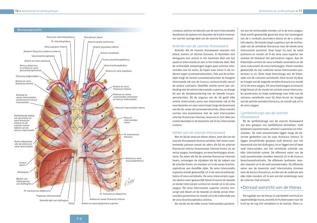 Encyclopedie De Netter Collectie (Ademhalingsstelsel) - Binnenwerk
